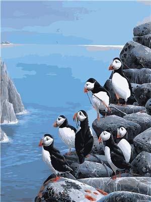 Leeg schilderen op cijfers, voor volwassenen, knutselen, voorgedrukt, voor kinderen en volwassenen, verschillende sets met vogels aan de rand van de Falaise handwerk schilderij decoratie thuis, 30 x 40 cm