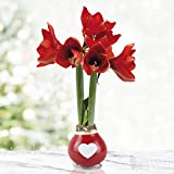 Be Mine Waxed Amaryllis Flower Bulb with Stand, No Water Needed