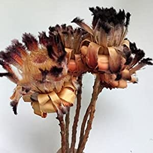 Artificial and Dried Flower Narcissus Dried Flower Air Dried Real Flower Home Flower Arrangement Cafe Shop Decoration Natural Plant Wedding Decor – ( Color: C 1PCS )