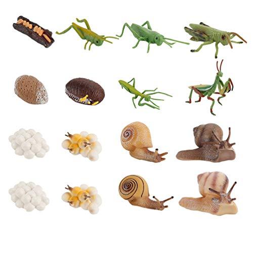 TOYANDONA Conjunto de Figuras Do Ciclo de Vida Do Inseto Locust 4 Praying Mantis Caracóis Do Ciclo de Vida de Modelo Brinquedos Auxiliares de Ensino Brinquedos Educativos para Crianças
