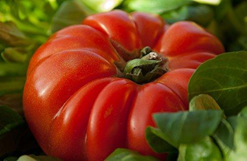 100 graines de tomate coeur de boeuf gros fruit rouge