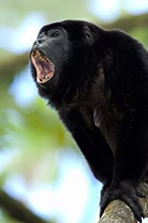 Close-up of a Black Howler Monkey (Alouatta caraya), Costa Rica Poster Print by Panoramic Images (24 x 36)