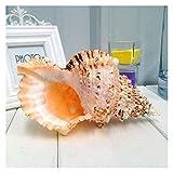 Grandes conchas marinas naturales, enorme concha del océano, traje para adornos de fiesta de playa de playa, artesanías de bricolaje, paisajismo de acuario de tanque de pescado, decoraciones para el h