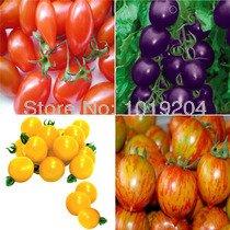 Livraison gratuite, 24 espèces de Mexico mini-pot petite tomate, graines de tomates conventionnelles un sac de 200 grains