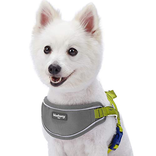 Blueberry Pet No-Pull Neoprene Padded Training Dog Harness