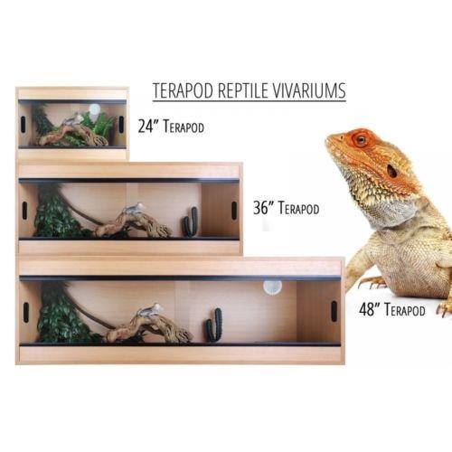 Bearded Dragon Vivarium: Amazon co uk