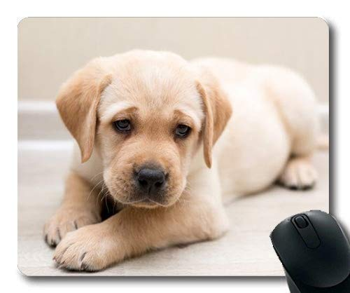 Yanteng Alfombrilla de ratón para Juegos, Perros Mascotas de Cachorros Alfombrillas para ratón, Animales Gatita de Perro Perrito de Golden Retriever Mousepad Rubber YT 045
