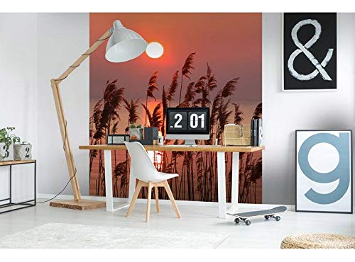 Vlies Fotobehang RIET | Niet-Geweven Foto Mural | Wall Mural - Behang - Reusachtige Wandposter | Premium Kwaliteit - Gemaakt in de EU | 225 cm x 250 cm