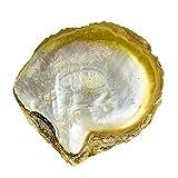LIRRUI 13-15cm Natural Amarillo Madre de Pearl Shell Náutico Decoración de Hogar Aquarium Landscaping DIY Joyería Making