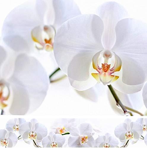 Rodnik Küchenrückwand -60x300 cm -Orchidee -Spritzschutz -Verschiedene Designs -Wandverkleidung -UV-DIREKTdruck (Weiße Orchidee)