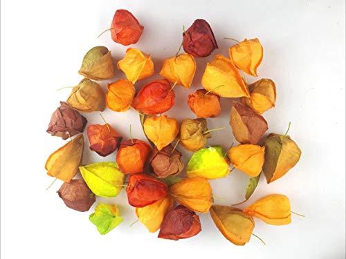 Treasured Memory Künstliche Physalis Orange Grün Braun Rot Gelb wie echt Küche Deko Obstschale Home Schale Obst Auslage Restaurant