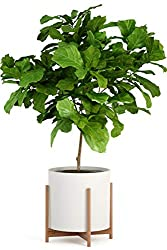 "Fox & Fern Wide Modern Plant Stand - Bamboo - EXCLUDING 15"" White Ceramic Planter Pot"