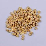 Semilla de maíz amarillo, maíz grande y pegajoso, piel fina, sin residuos,...