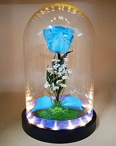 Rosa eterna Azul Celeste preservada. Cúpula con luz LED. Altura