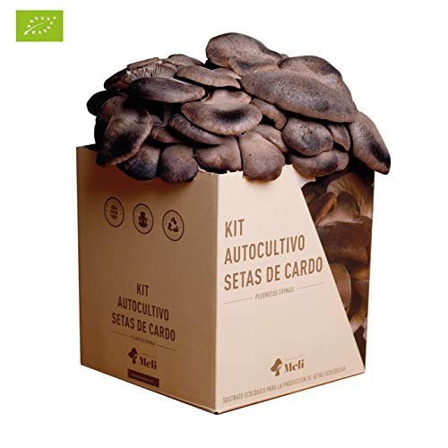 SETAS MELI | Kit Autocultivo Setas...