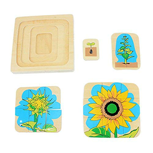 Montessori Children Wood Plant Education Toy Baby Toddler Life Cycle of Sunflower Puzzles Jingsaw Preschool Brinquedos Juguets