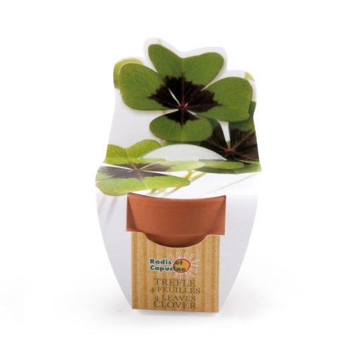Radis et Capucine Culture Pot de terre cuite pour faire pousser son trèfle à 4 feuilles, Multicolore, 10x5.5x6.5 cm