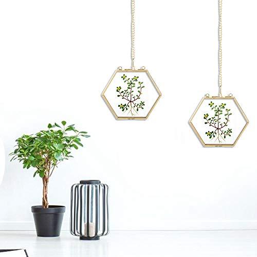 Oumefar Cadre Photo en Verre Cadre de spécimen de Soudure Hexagonal géométrique sans Plomb en Verre pour Bureau pour Chambre à Coucher