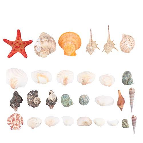 Imikeya schelpen, gemengde oceaanschelpen, natuurschelpen, perfect voor het vullen van bloempotten, foto prop (350 g Ik kan niet in water dompelen)