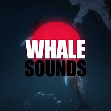 Whale Sounds