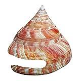 Snufeve 5-10cm Caracol Vida Marina Natural de Shell Concha Peces de Acuario Tanque Paisaje Crafts Decoración mar Caracoles, como se Muestra, Un tamaño
