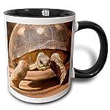 Mug Guscio di tartaruga irradiato, MadagascarJoe e Mary Ann McDonald 'Tazza nera a due toni, 11 once, multicolore