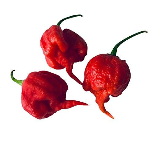 30 Smoking EDS Carolina Reaper Hot Pepper Samen, by-Samen Store-