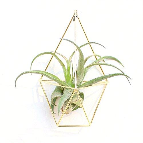 Quanjucheer géométrique à suspendre Air Plante Succulente Triangle support de rack de fleurs Home Garden Décoration murale (pas de fleurs) 12.5cm x 8cm x 21cm Noir