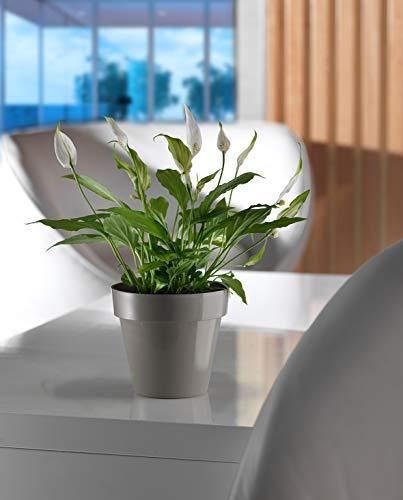 Art Plast Vase forment cm 18 x 16.3 Taupe