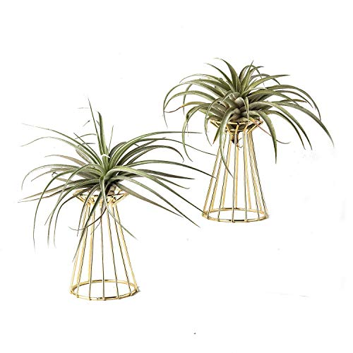 Metal stand for air plants