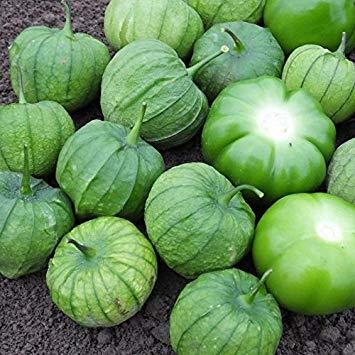 Potseed Germinazione I Semi: 50 - Semi: Tamayo Ibrido F1 Tomatillo Semi - per Salse Verdi e Cucina Messicana. !!!