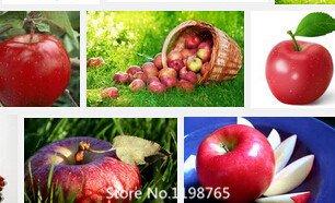 Promotion de 30 graines de noix de cajou d'Apple Plante Anacardium occidentale Tree Planting Seeds à nouveau et fraîche graines de fruits noix de graines