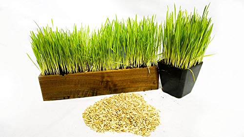 Thunder Acres Cat Grass Blend - Wheat, Barley, Oats, and Rye Seed Mix - Non-GMO - Certified Organic - Bonus CAT Toy (10 LB)