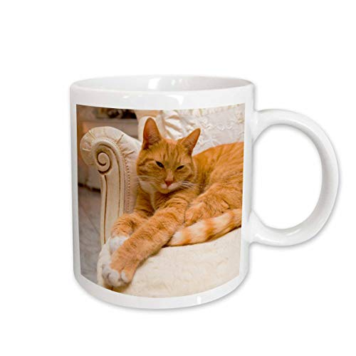 3dRose mug_236171_2'Happy orange tabby cat relaxing on fancy armchair Keramiktasse, keramik, weiß
