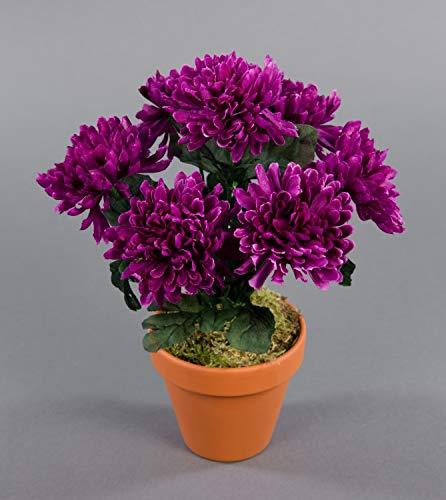 Seidenblumen Roß Chrysanthemenbusch 26cm Fuchsia im Topf DP Kunstpflanzen Kunstblumen künstlichen Pflanzen Blumen Chrysantheme