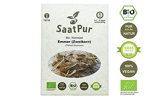 SaatPur Bio Keimsprossen - Emmer - Zweikorn - Sprossensaat 60g Ur-Getreide Weizengras