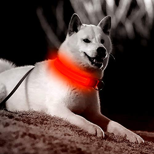 Dog LED Collar USB Rechargeable Glowing in Dark Flashing (83% Off)