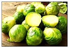 """Name: Long Island Improved Brussels Sprouts   Type: Heirloom Size at Maturity: Up to 24"""" Plants   Days to Maturity: 90 -115 Days Light Requirement: Full Sun   Planting Time: Cool Season Sowing Method: Indoor Sow   Planting Depth: 1/4""""   Plant Spacing..."""