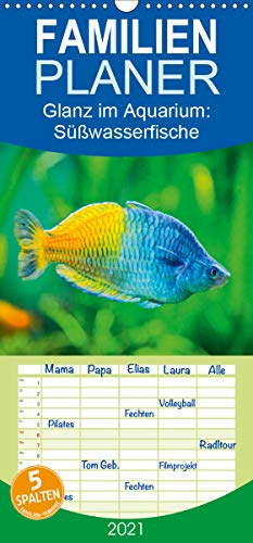 Glanz im Aquarium: Süßwasserfische - Familienplaner hoch (Wandkalender 2021, 21 cm x 45 cm, hoch)