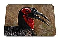 26cmx21cm マウスパッド (南の地上サイチョウ頭くちばし鳥) パターンカスタムの マウスパッド