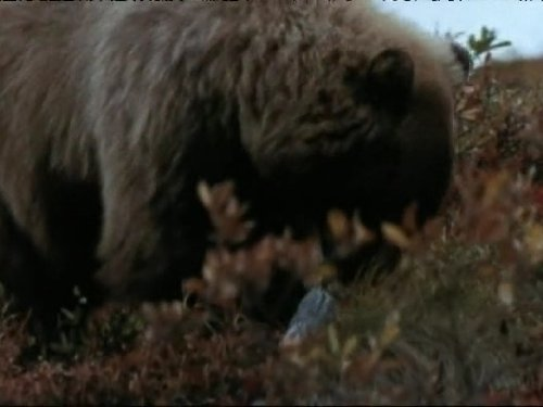 Time of the Grizzly