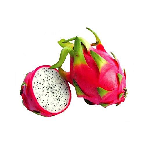 Semillas de Fruta de La Pitaya 30pcs Semillas Frutales Comestible Fruta Ex/ótica para Granja Jard/ín Balcon Interior y Exteriores Amarillo Huerto