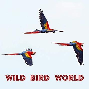 Wild Bird World – Jungle, Sounds Effect, Bird Song, Relaxing and Beautiful Nature