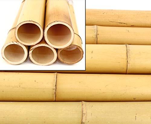 1x Bambusrohre Moso Gebleicht, Durch. 8-9cm, Länge 200cm - Bambus Architektur Bauen mit Bambusrohren