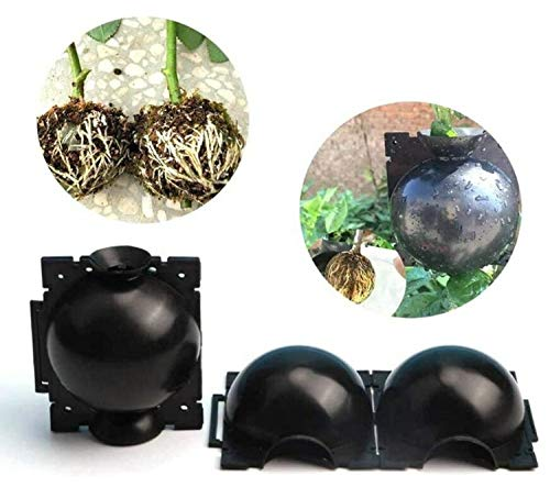 6 PACK dispositivo palla di radicazione riproduzione germinazione vegetale asessuata, innesto pianta margotta riutilizzabile per giardinaggio botanica radice albero propagazione ad alta pressione 8mm