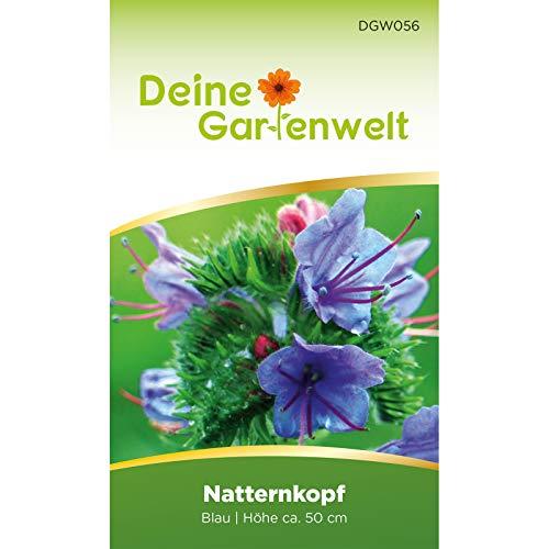 Natternkopf blau   Gewöhnlicher Natternkopfsamen   Samen für Echium plantagineum
