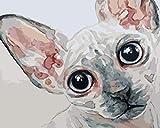 CMYKYUH Pintar por Numeros para Adultos Niños - Gato AnimalDIY Pintura al óleo sobre Lienzo Pintar por Numeros para Adultos Principiantes 16 * 20 Pulgadas (Sin Marco)