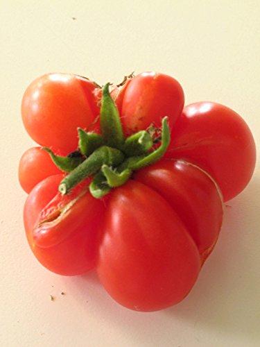 Rote Reisetomate (Solanum lycopersicum) 10 Samen, alte indianische Sorte