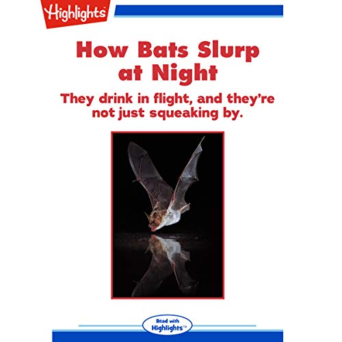 How Bats Slurp at Night copertina
