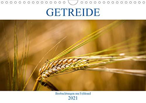 Getreide - Beobachtungen am Feldrand (Wandkalender 2021 DIN A4 quer)